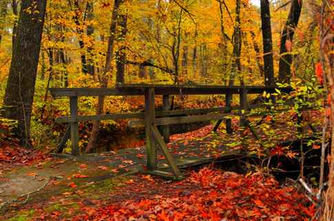 Myrick Creek in Fall